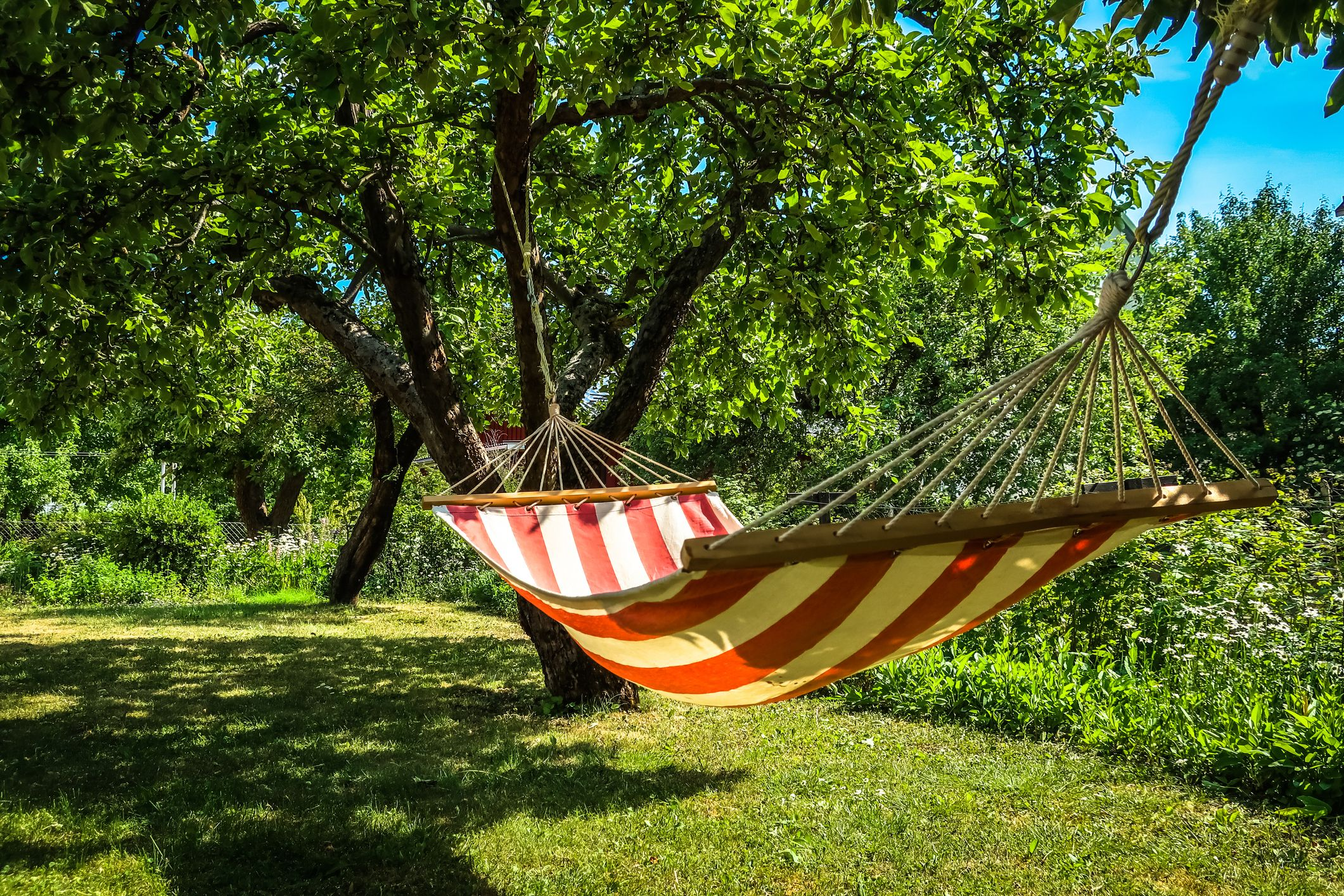 Here's How to Hang a Hammock in Your Backyard