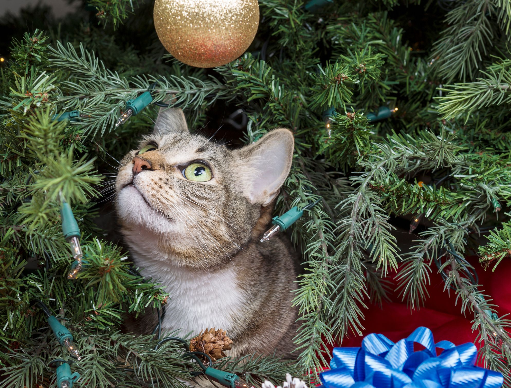 How to Keep Your Cat out of Your Christmas Tree