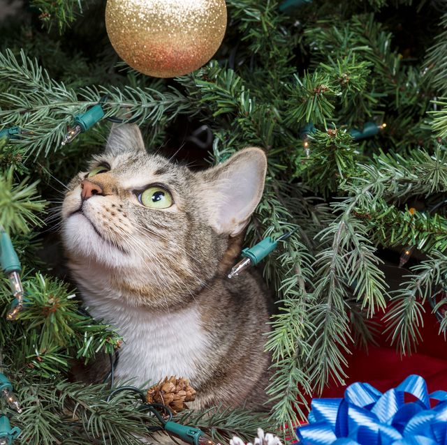 Cat Proof Christmas Tree.How To Keep Your Cat Out And Away From The Christmas Tree