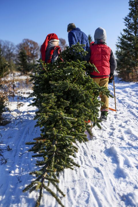 Christmas Tree Not Taking Water.How To Keep A Christmas Tree Alive How To Make A Christmas