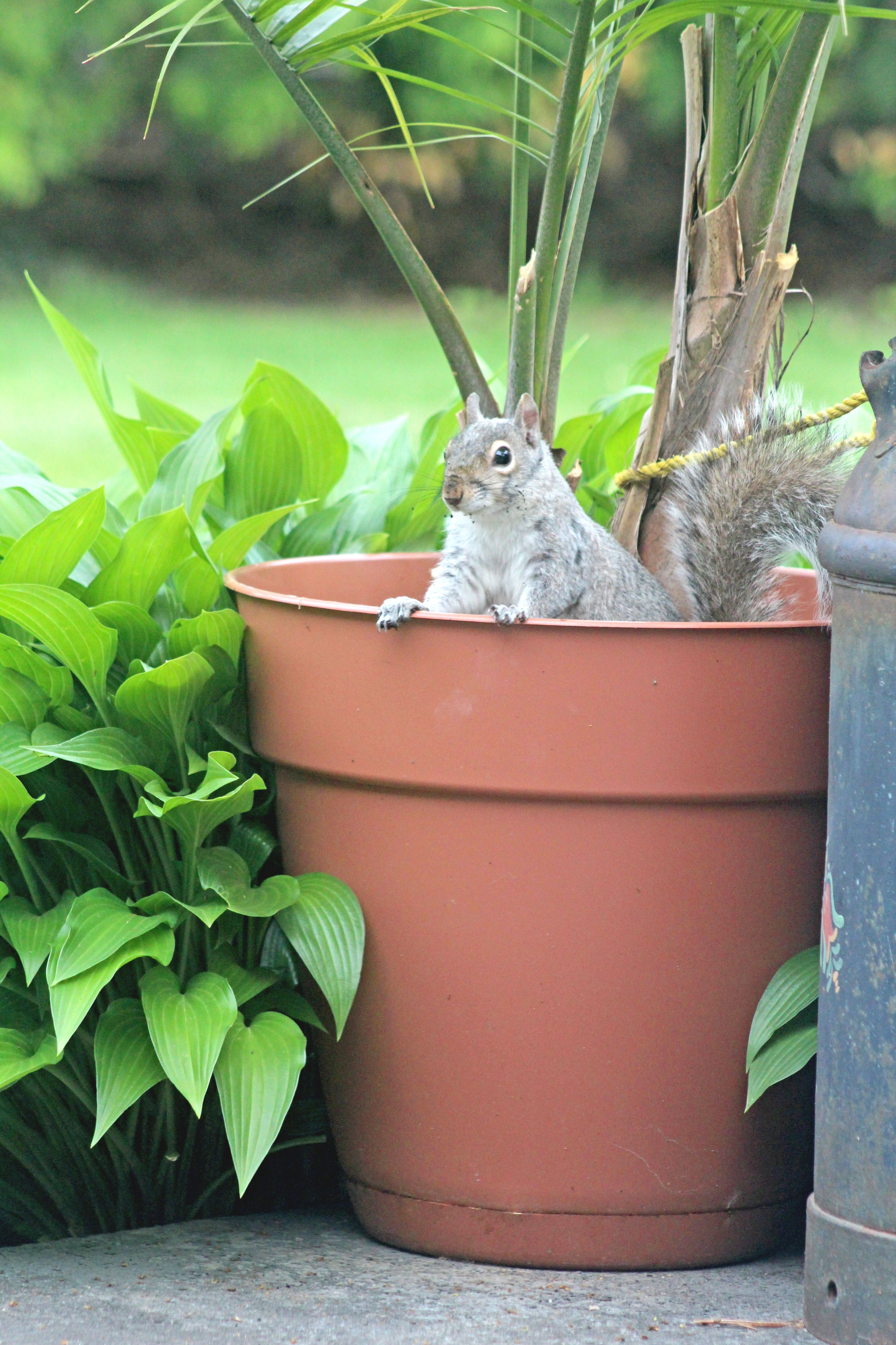 How To Keep Squirrels Out Of Your Garden Best Squirrel Repellents