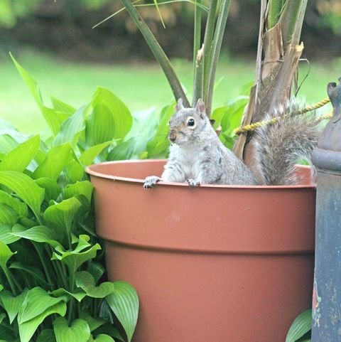 How to keep squirrels out of your garden best squirrel - How to keep squirrels away from garden ...