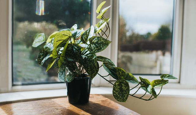 how to look after houseplants in autumn