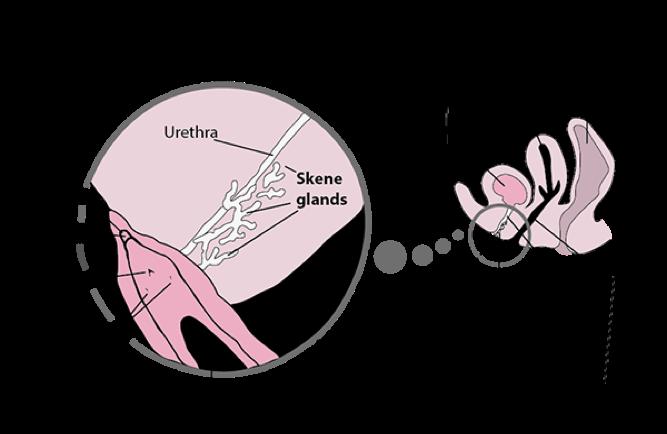 Sex positions that make women squirt