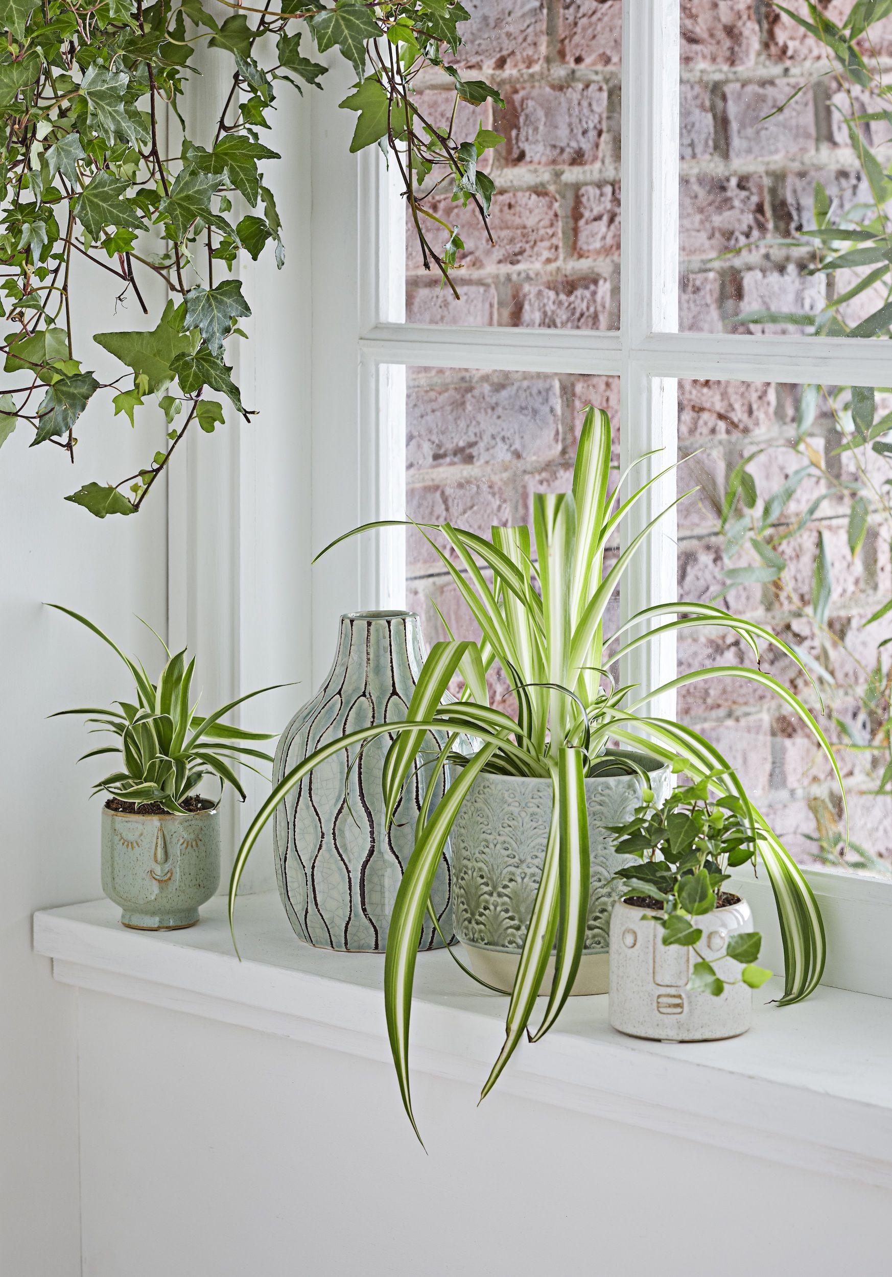 Indoor Plants - cover
