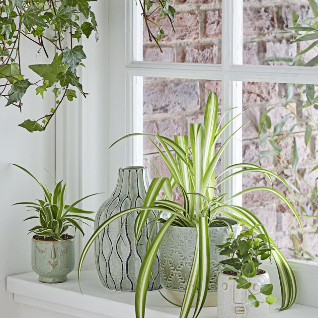 how to repot a plant, repotting a plant
