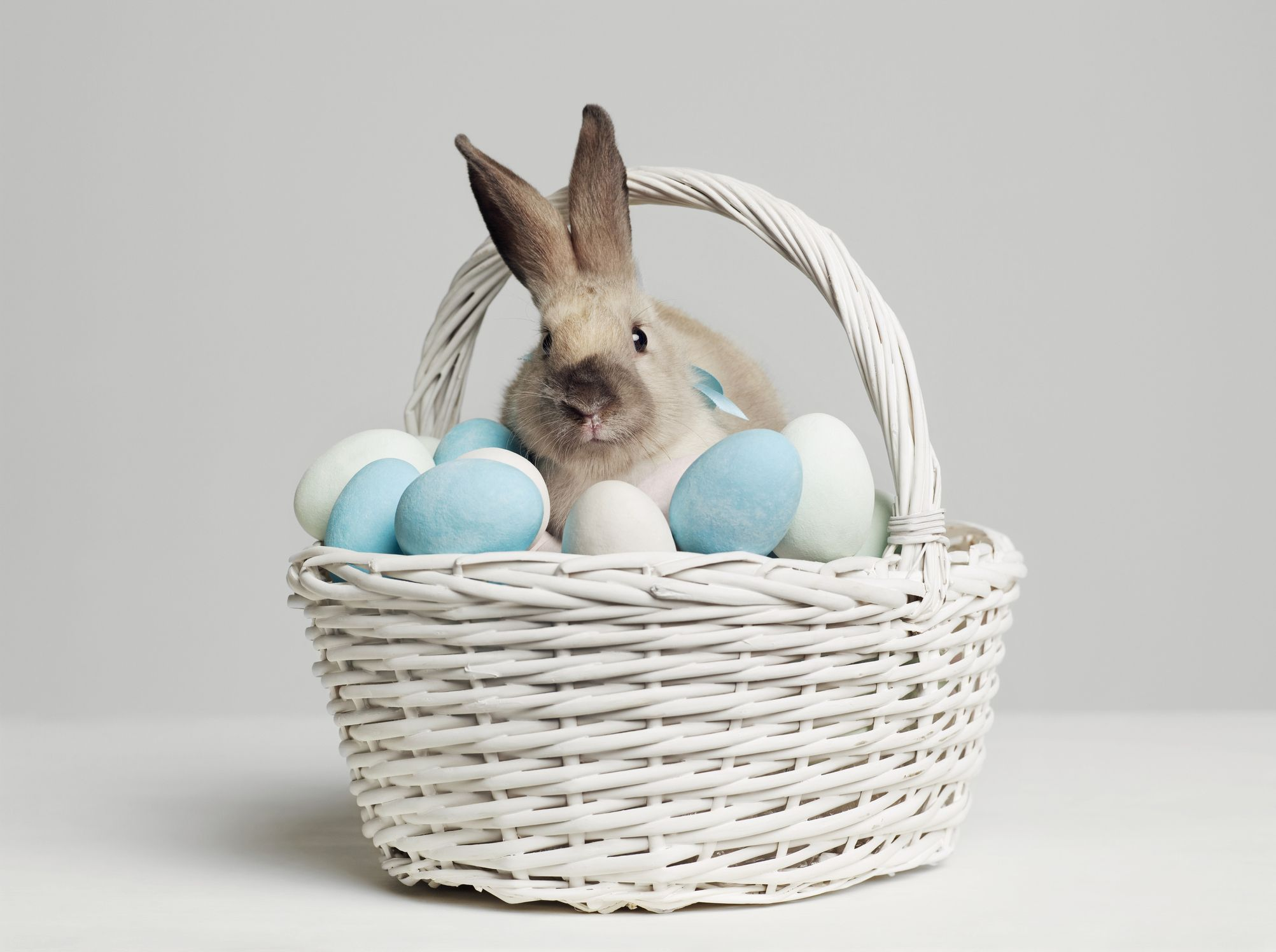 how to track the easter bunny 1585856297