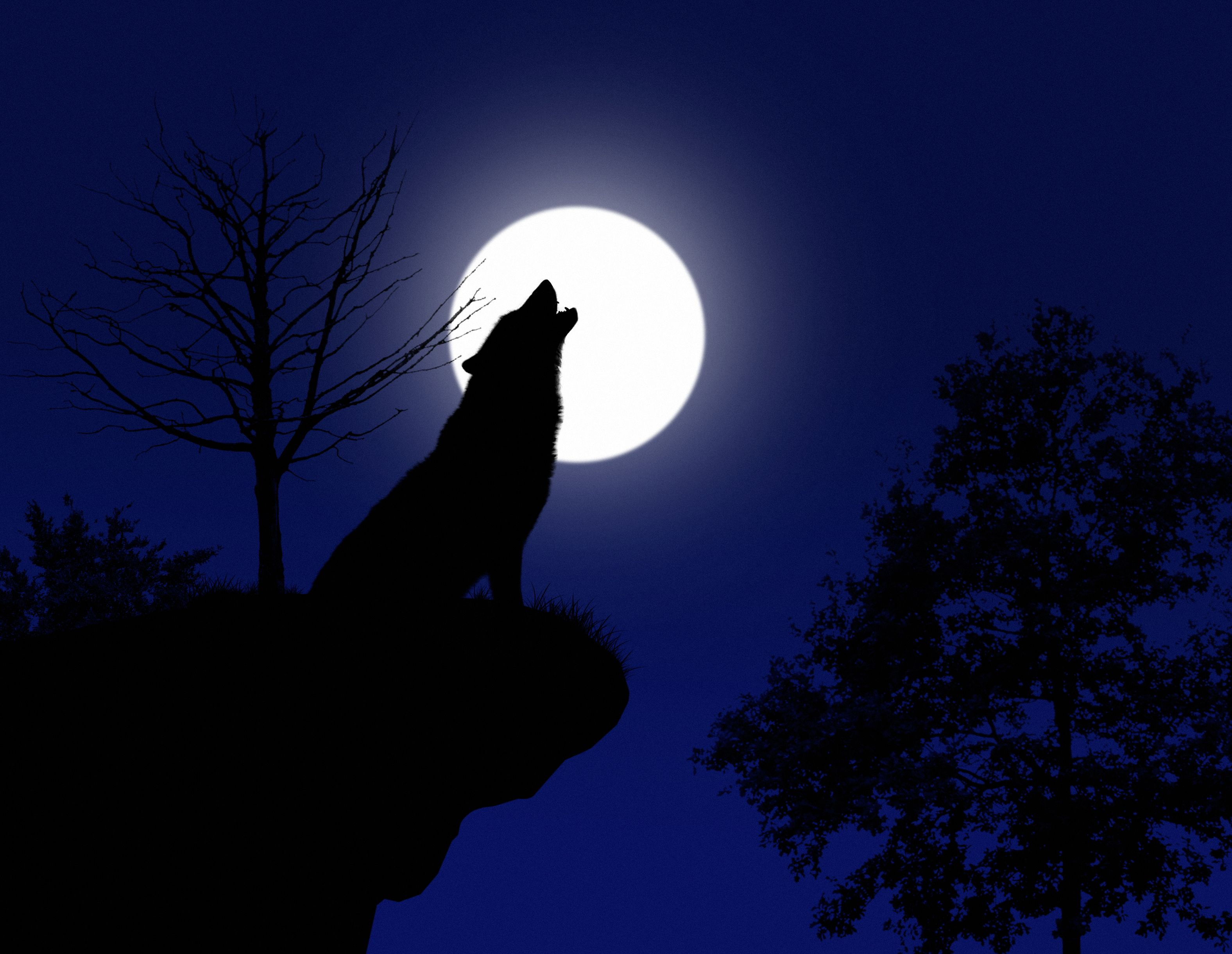 January's Wolf Moon, the First Full Moon of the Year, Will Reach Its Peak This Week