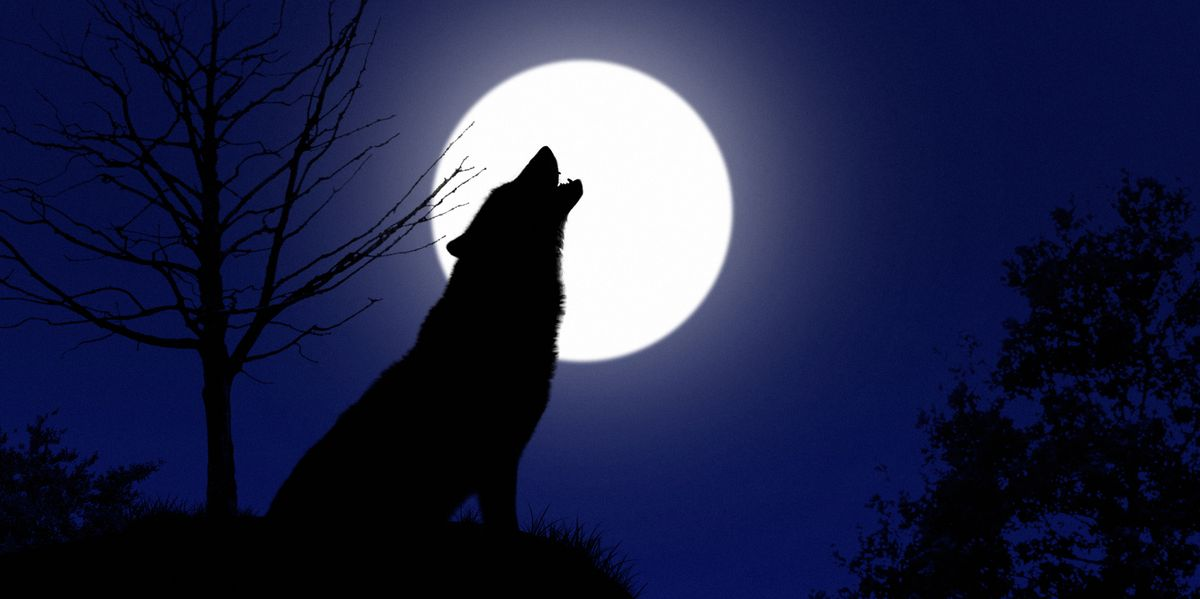 January's Wolf Moon, the First Full Moon of the Year, Will Reach Its Peak This Week - Prevention.com
