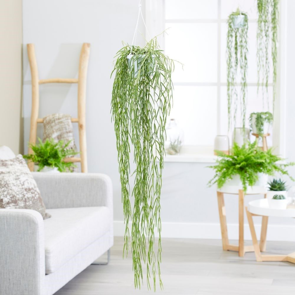 Best Indoor Hanging Plants For The Home