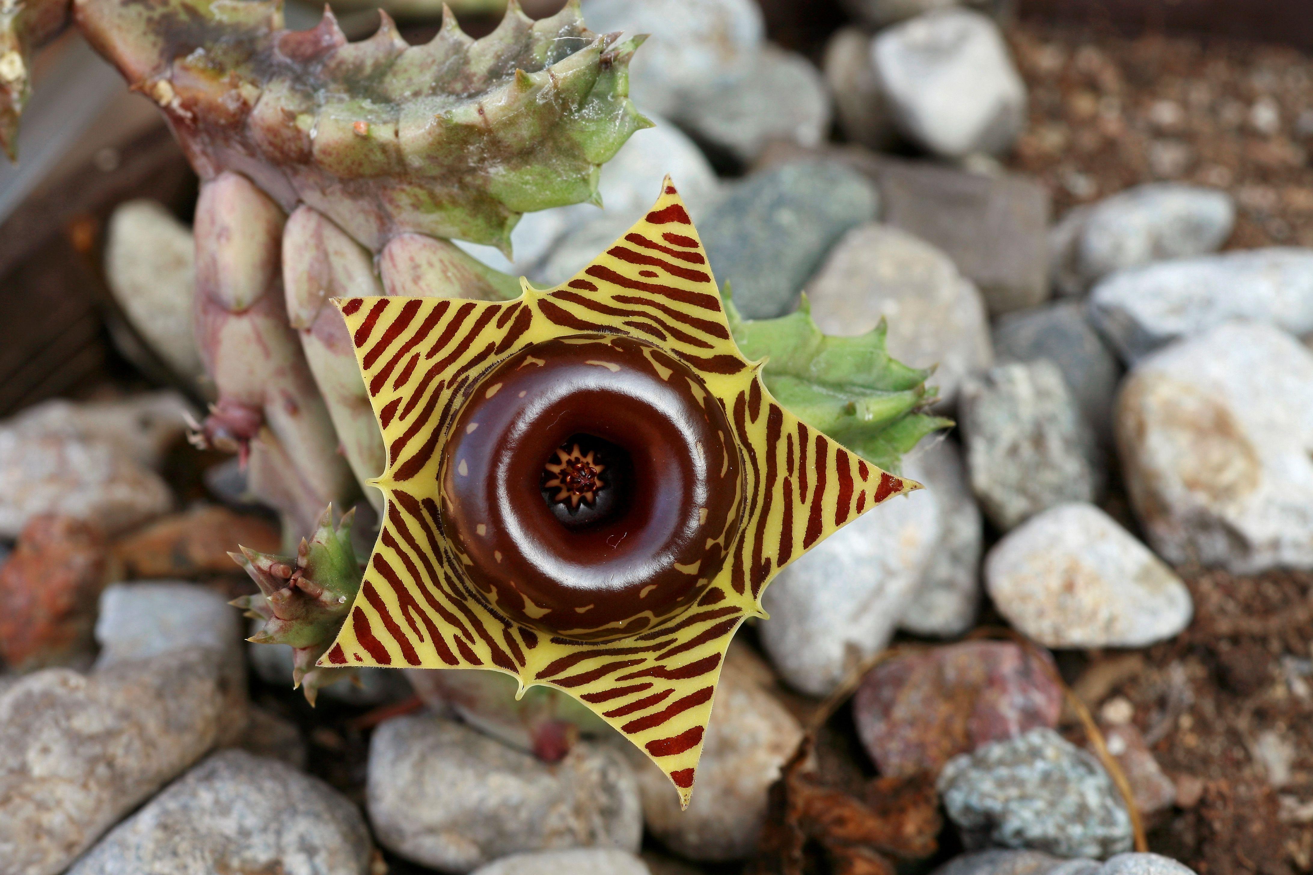 16 Strange Houseplants Weirdest Indoor Plants