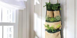 Minihuerto de aromáticas en la pared de la cocina