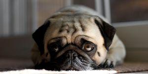 Huisdieren geen emoties
