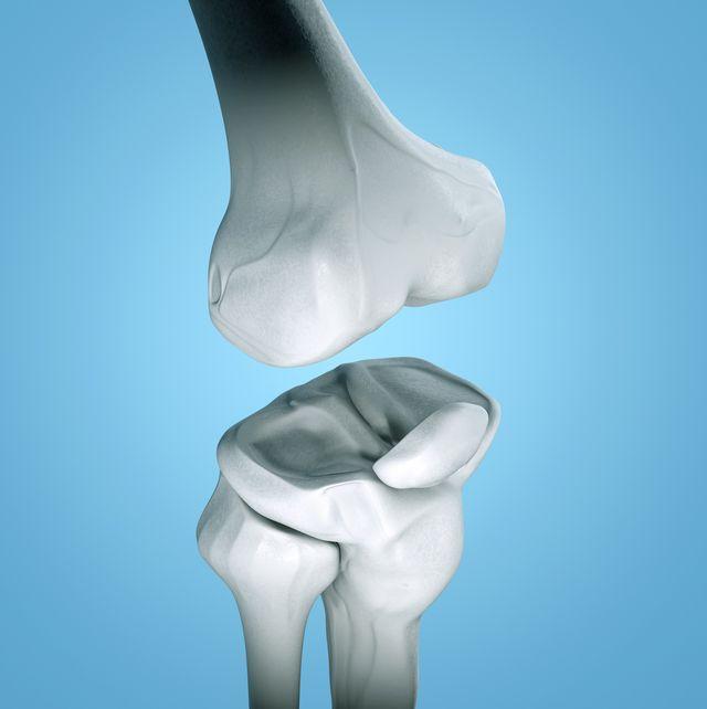 human knee, illustration