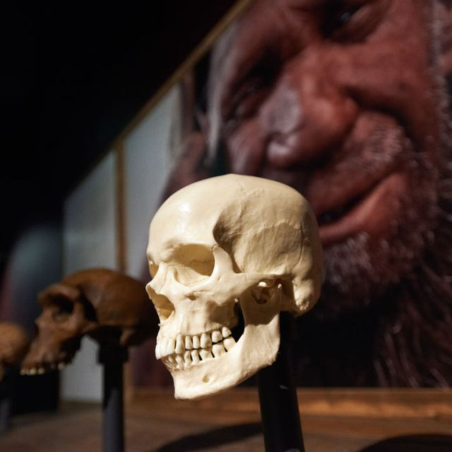 'extinction an end to the world '   exhibition in toulouse