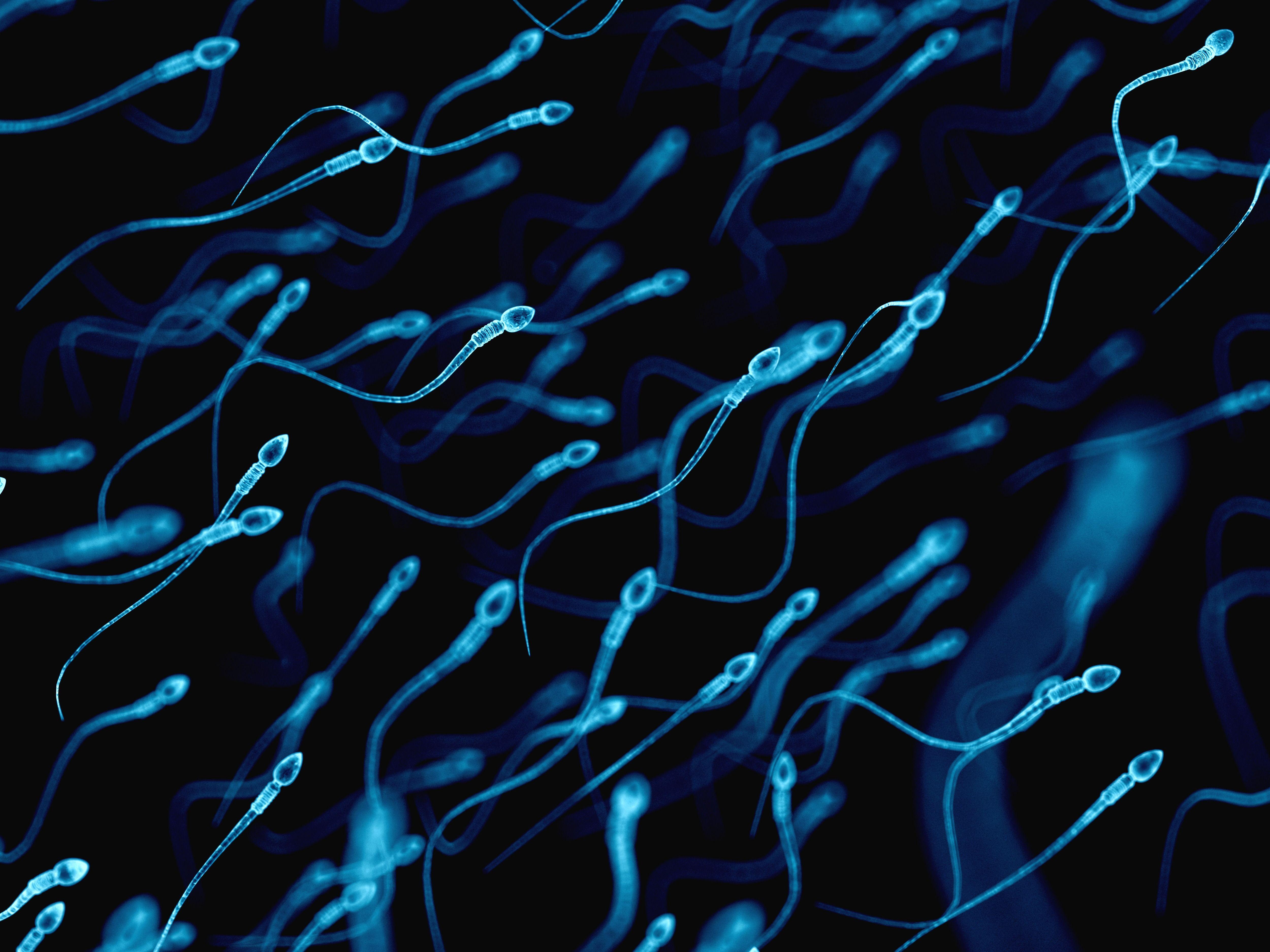 Inside the Male Fertility Crisis
