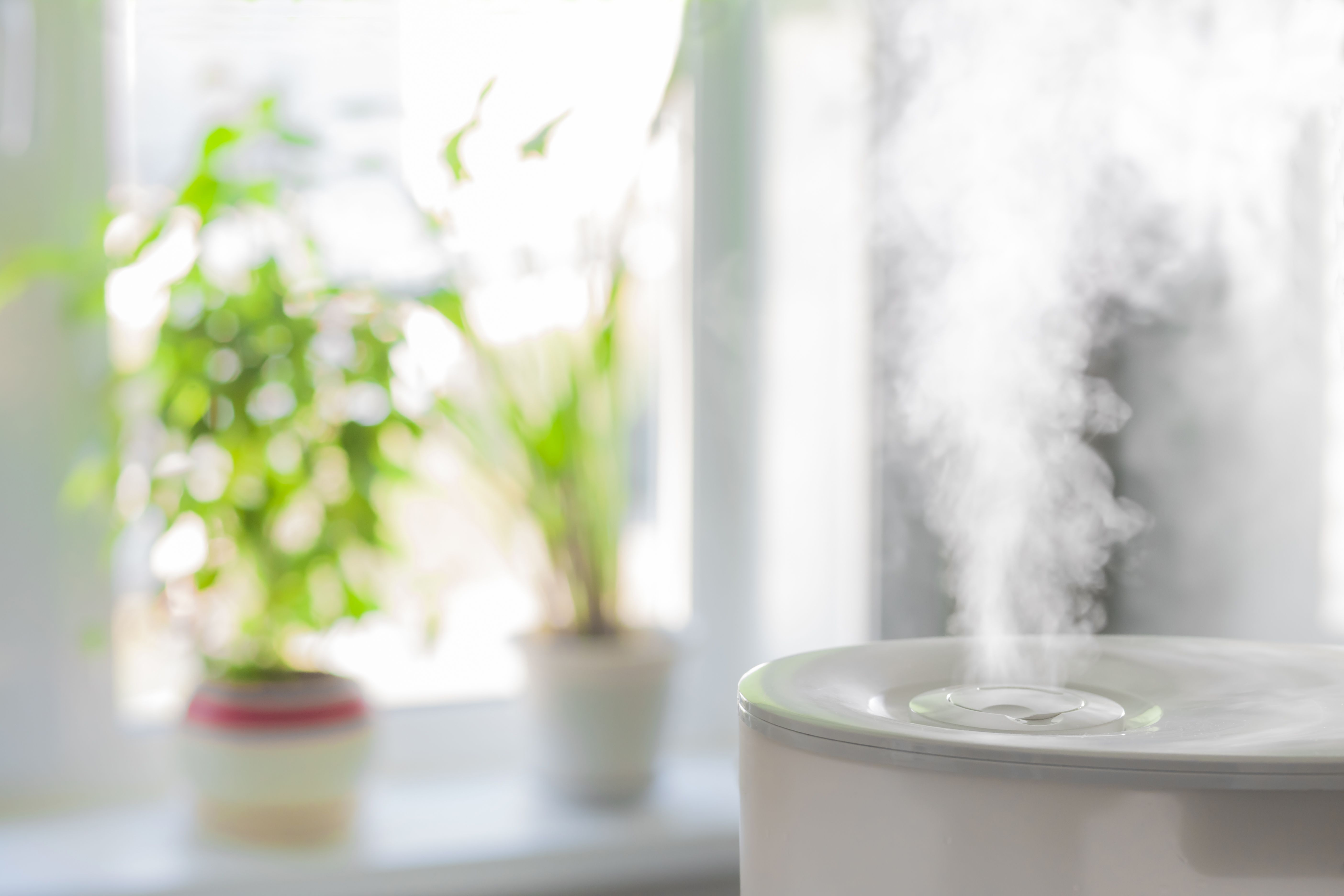 The 7 Best Humidifiers On Amazon, According To Reviews