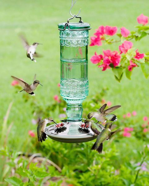 10 Best Hummingbird Feeders For Your Yard Top Feeders For Hummingbirds