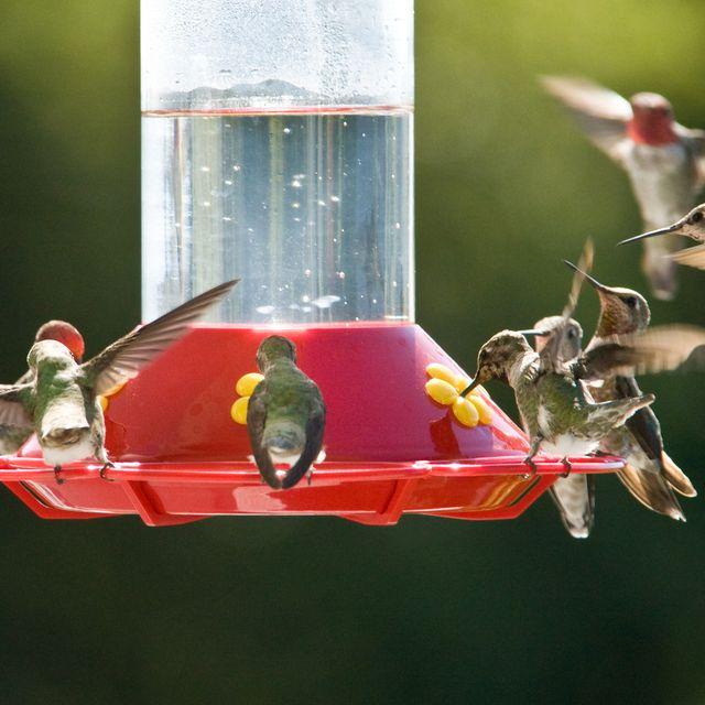 8 Best Hummingbird Feeders to Create a Bird Sanctuary at Home