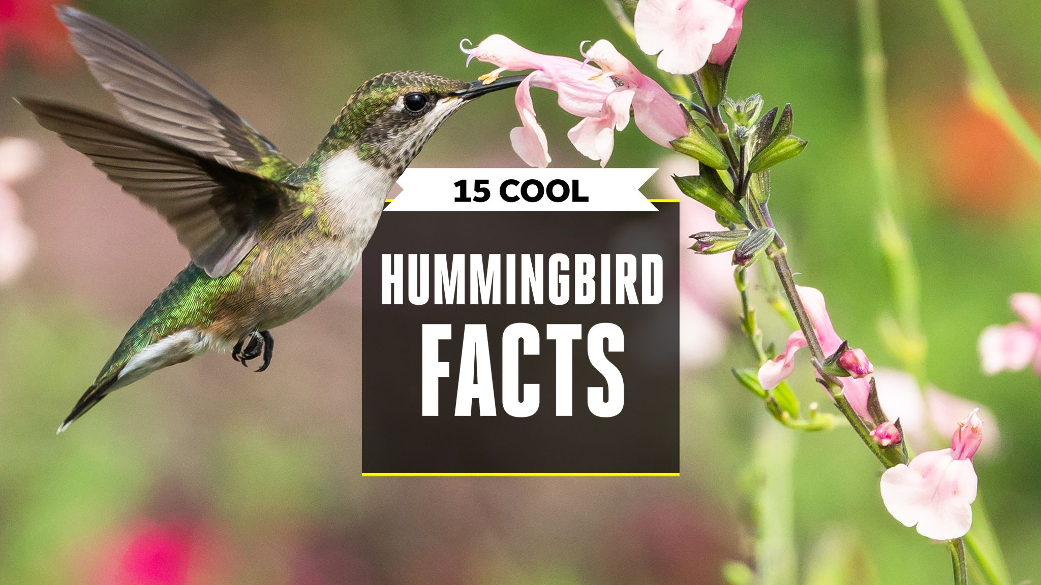 15 Ways Hummingbirds Are Even Weirder Than You Think