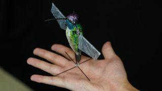robotic hummingbird