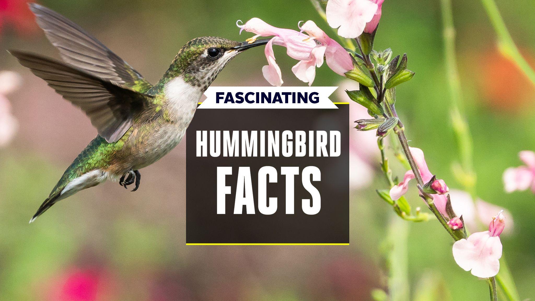 16 Ways Hummingbirds Continually Amaze Us