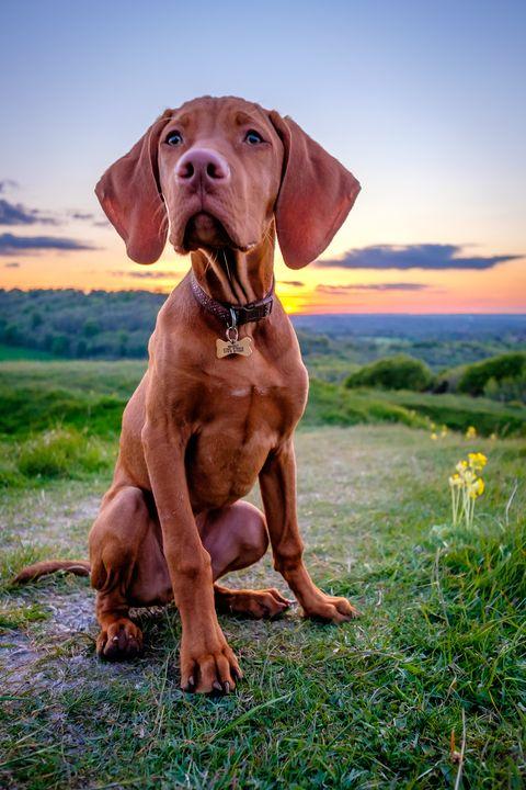 17 Medium Sized Dogs Best Medium Sized Dogs