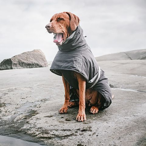 Hurtta Extreme Warmer Dog Coat photo