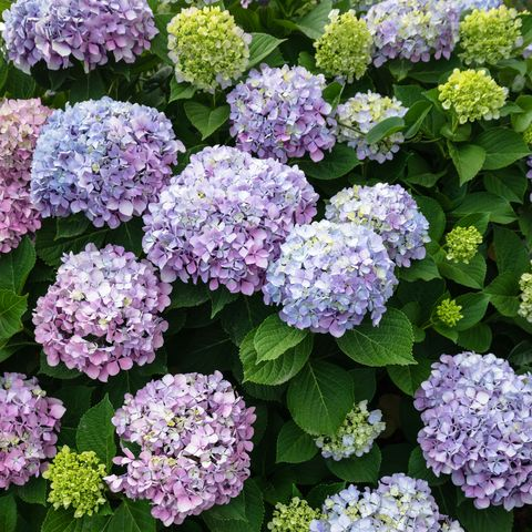 20 Best Perennial Flowers Easy, What Does Annual Bedding Plant Mean