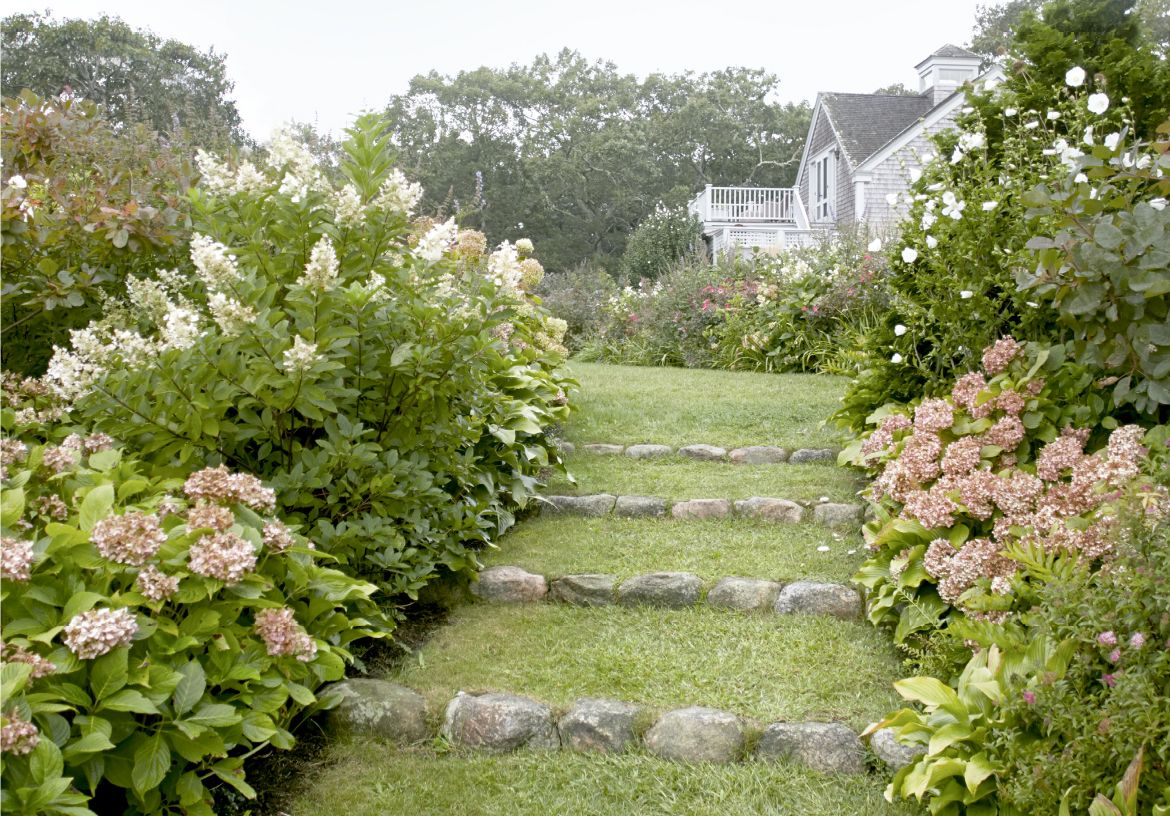 5 Main Types Of Hydrangeas What To Know About Popular Hydrangeas