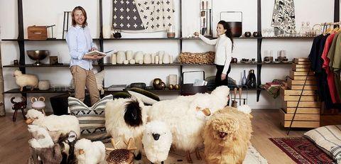 Fur, Dog, Room, Canidae, Furniture, Interior design, Carnivore, Sheep, Sealyham terrier,