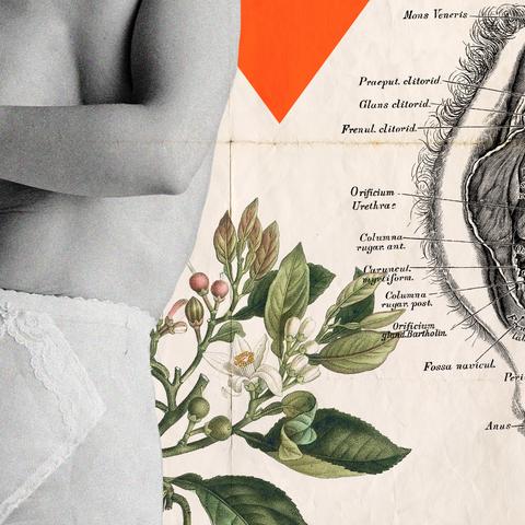 Botany, Plant, Illustration, Flower, Hand, Anthurium,