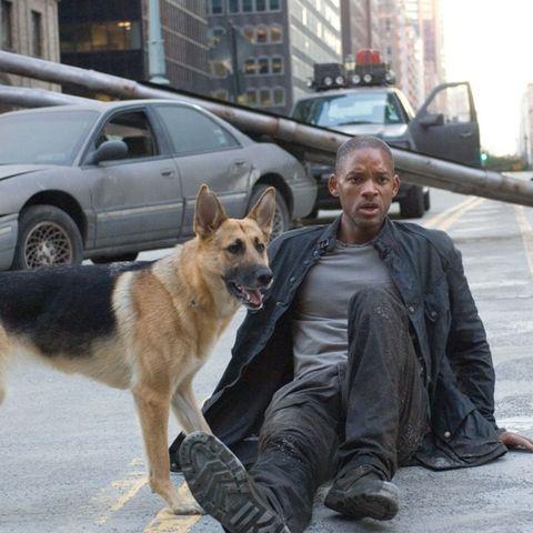 Dog, Vertebrate, Mammal, Canidae, Dog breed, Carnivore, Police dog, Dog walking, Working dog, Companion dog,