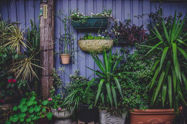 i 5 errori da evitare se fai giardinaggio