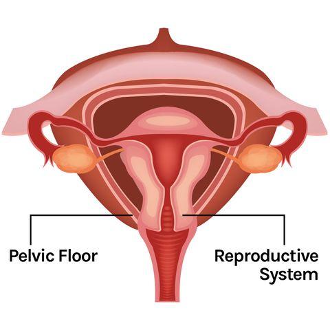 physical therapy pelvic floor pelvicfloorpt index pt