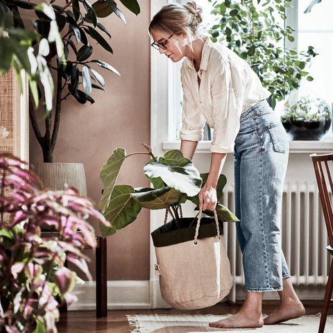 bolsa de cultivo botanisk de ikea