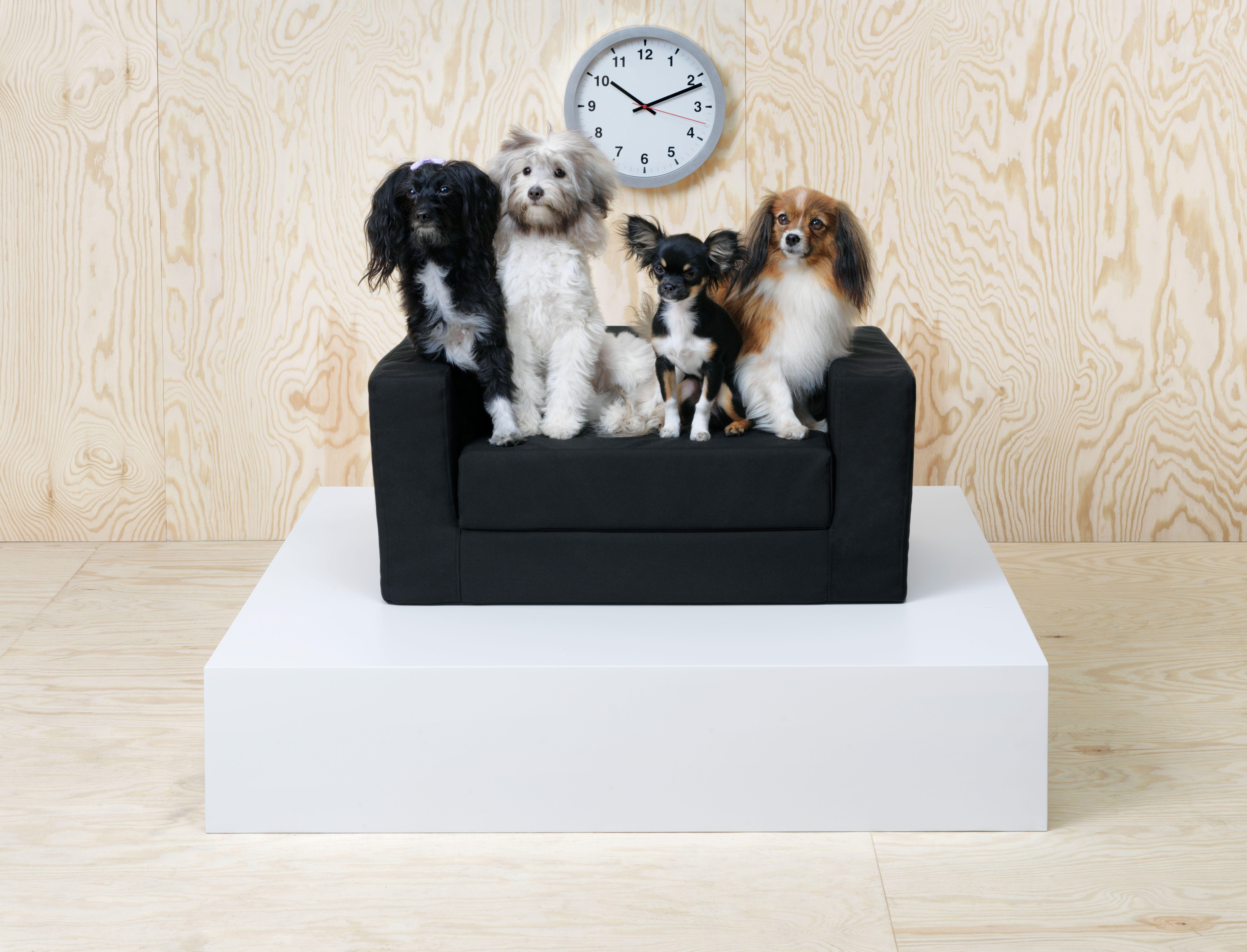 España Colección Para Ikea La De A PrepárateLlega Mascotas tQCdsrhx