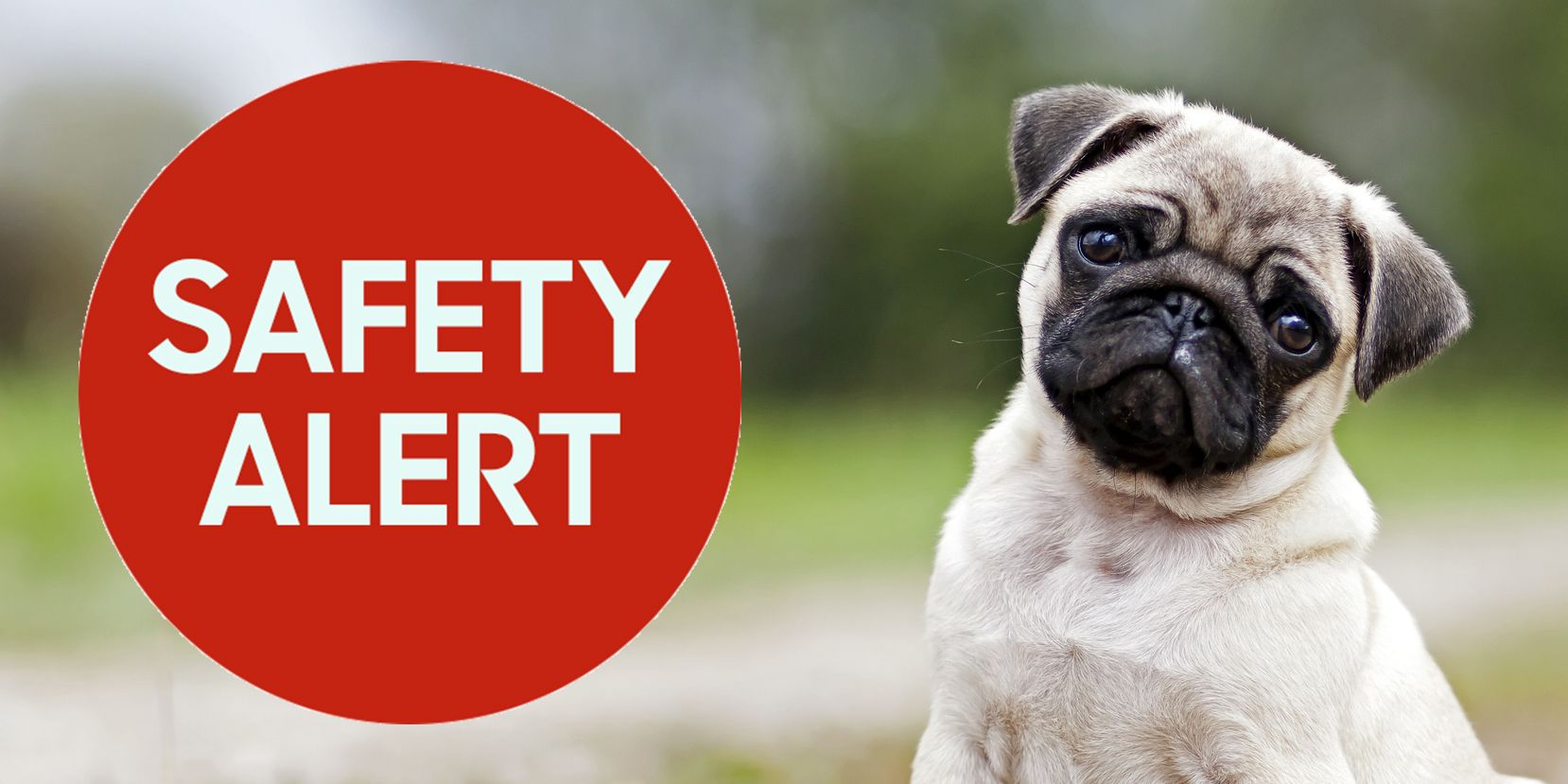IKEA Recalls Lurvig Pet Water Dispensers After 2 Dogs Die