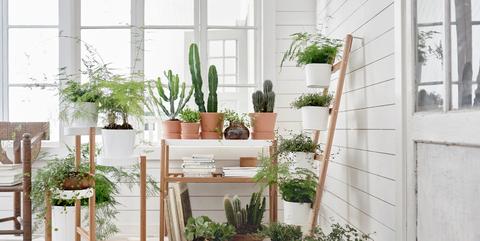 Flowerpot, Houseplant, Furniture, Plant, Room, Botany, Table, Grass, Interior design, Chair,