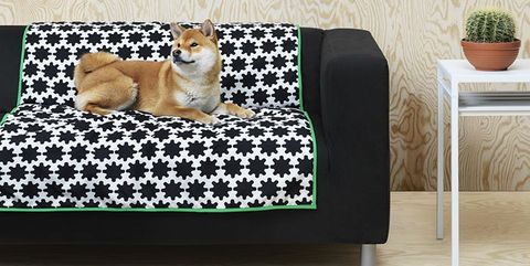 Furniture, Canidae, Sofa bed, Rectangle, Table, Couch, Cushion, Floor, Dog bed, Pembroke welsh corgi,