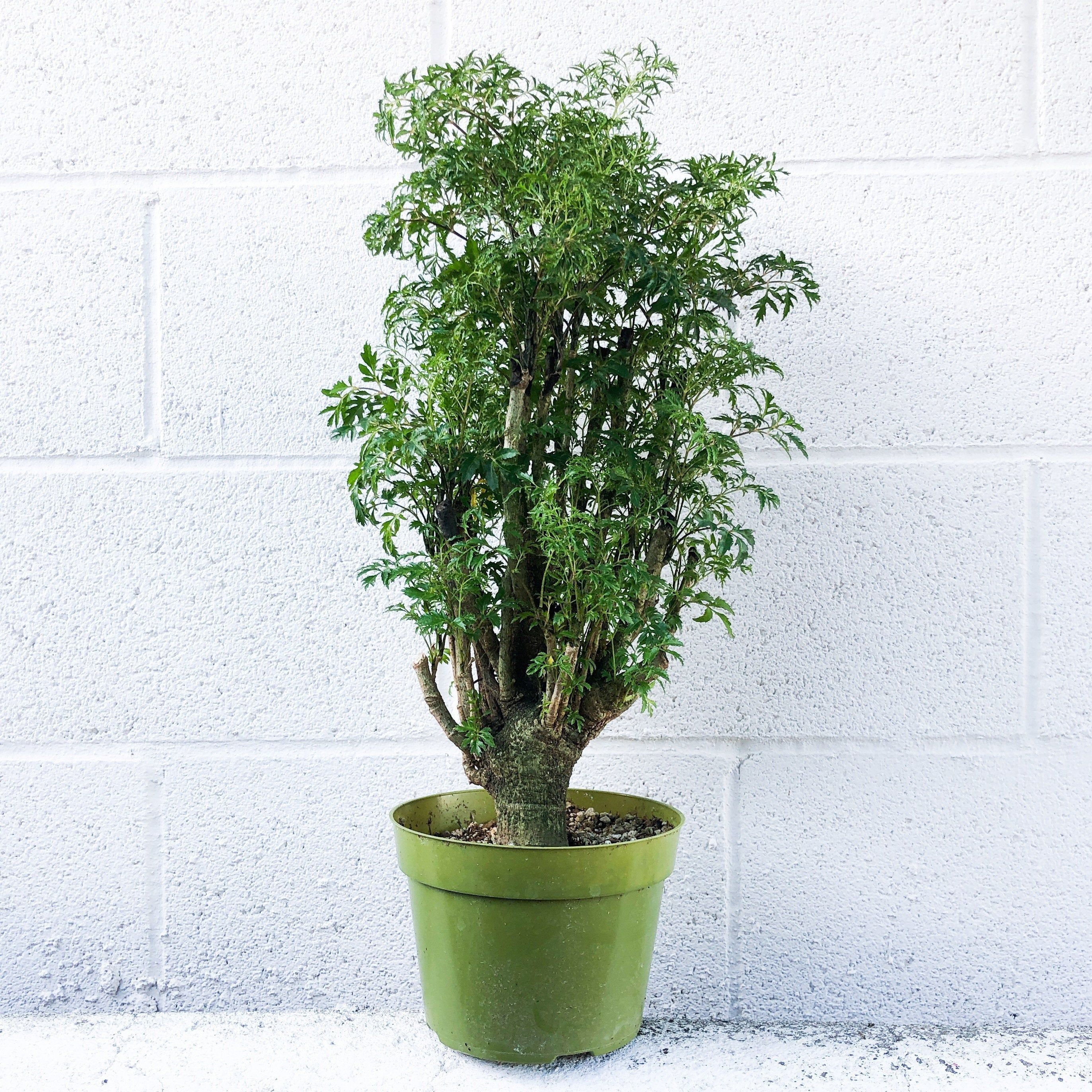 Houseplants That Can Survive Low Light