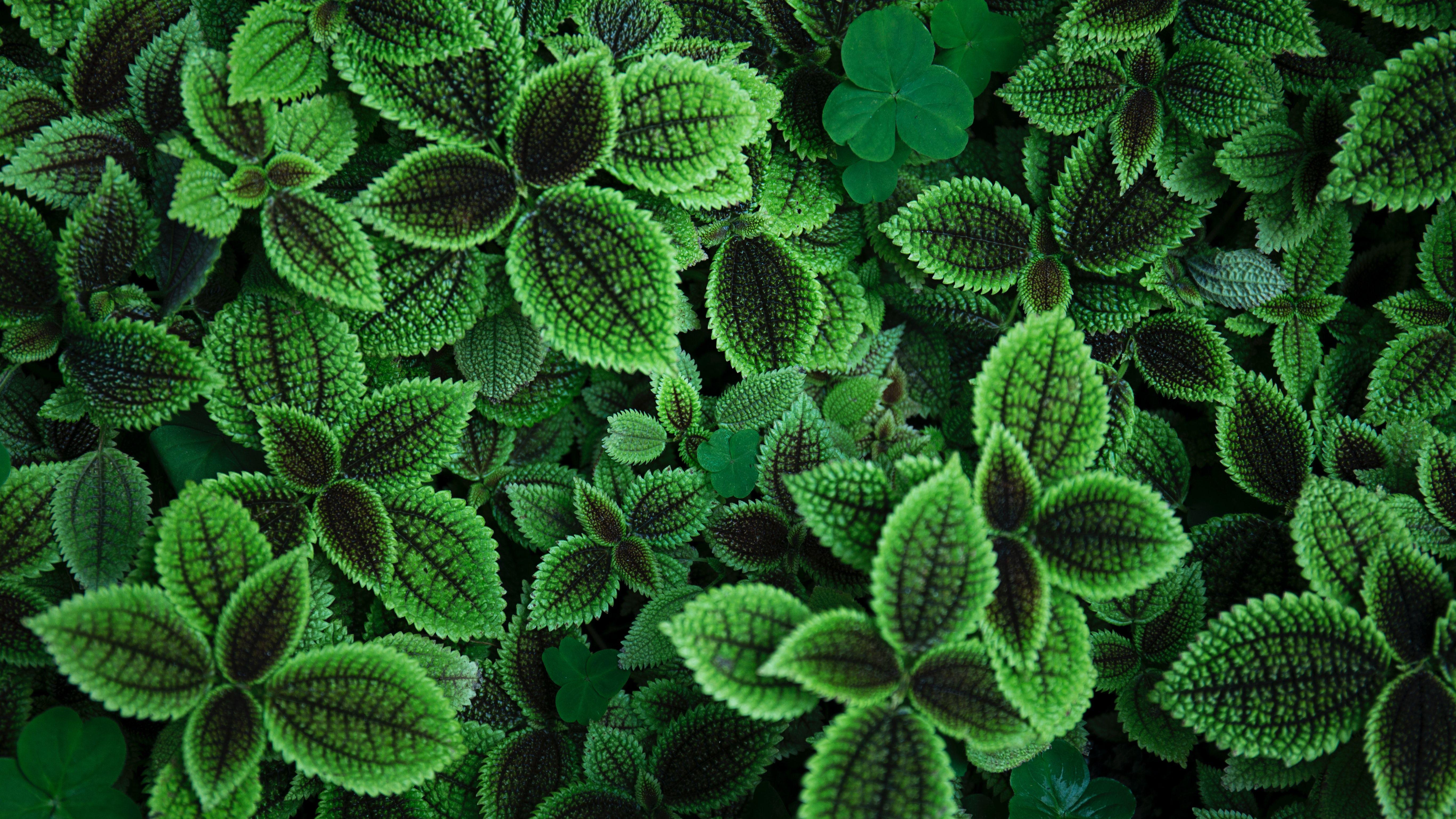 Piante Strane Da Appartamento questa nuova ricerca sull'illuminazione sostenibile dalle piante