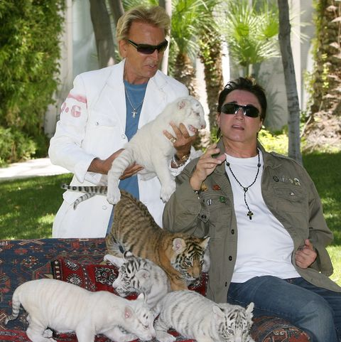siegfried and roy debut new tiger cubs