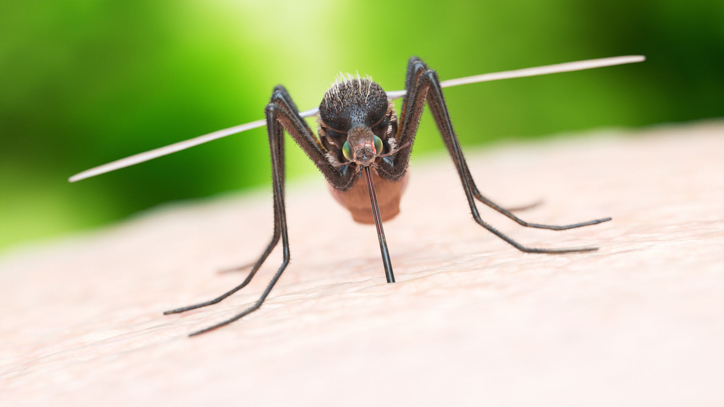 How Get Rid Of Mosquitoes Mosquito Control Tips