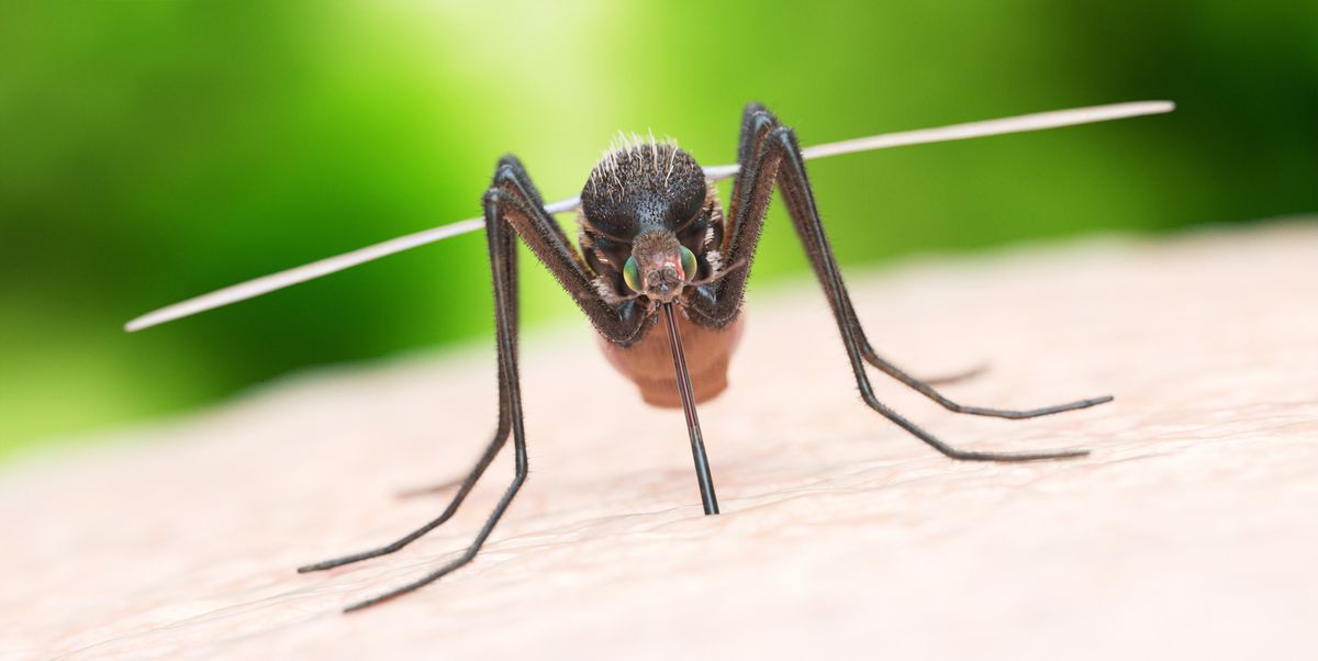 How Get Rid of Mosquitoes - Mosquito Control Tips