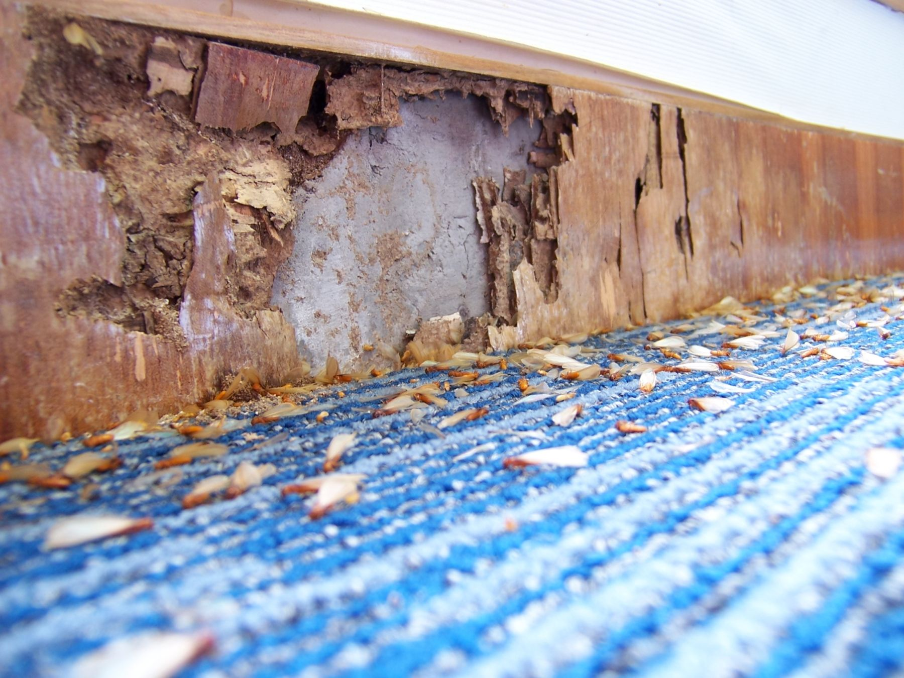 How To Get Rid of Common House Pests