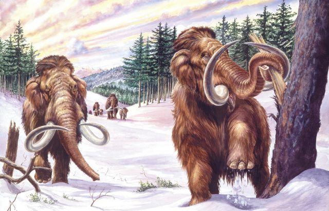 illustration of herd of mammoths mammuthus primigenius in winter landscape