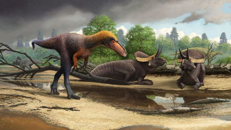 New Tiny T-Rex Cousin Discovered