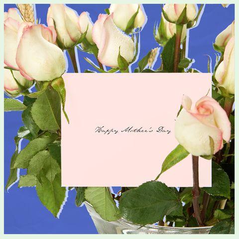 Flower, Petal, Plant, Flowering plant, Tulip, Greeting card,