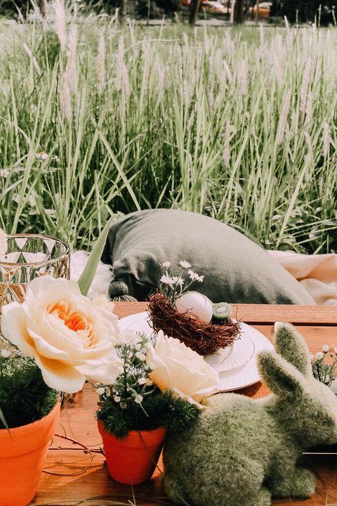 Flowerpot, Grass, Flower, Plant, Grass family, Botany, Garden, Spring, Landscape, Floral design,